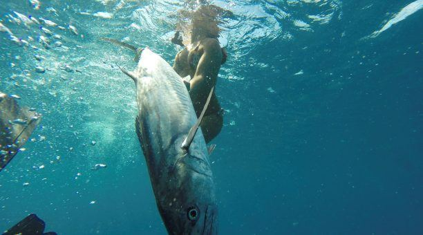 Catching a Barracuda