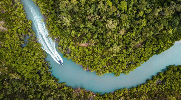 Boat Cruise Through the Mangroves
