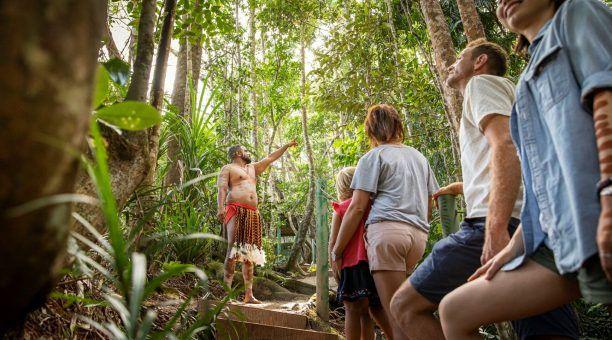 Pamagirri Rainforest Walkabout